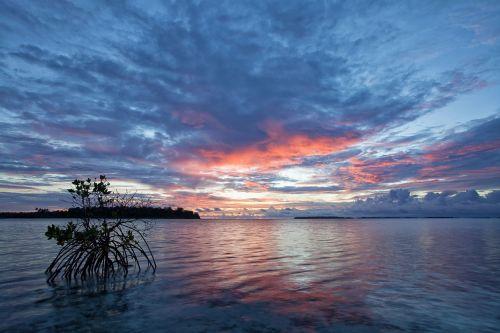 the shallow sea before sunrise mangrove