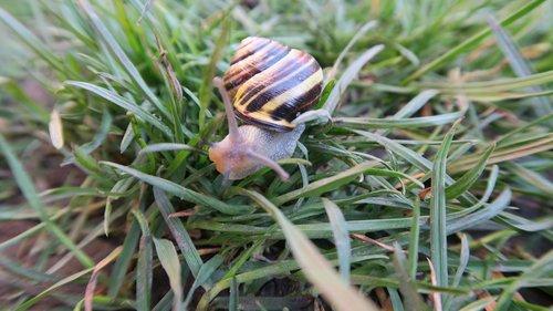 the sight of a snail  spring  garden
