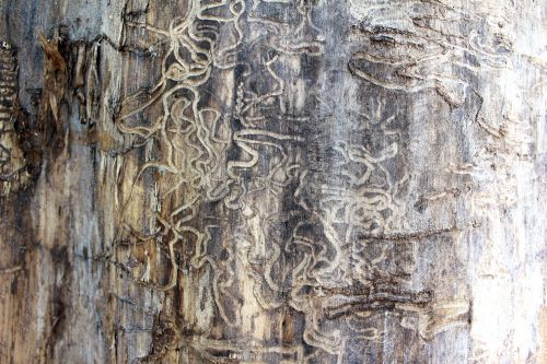 The Termites...Strike Again