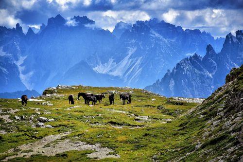 the three peaks of lavaredo horses mountain