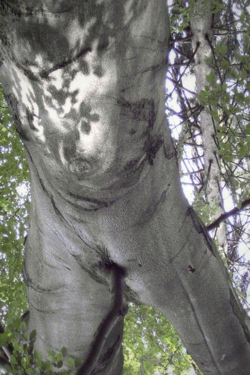 the tree-man a tree backwards turnov