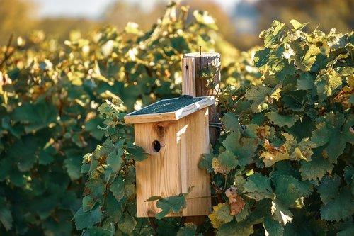 the vita  vineyard  box