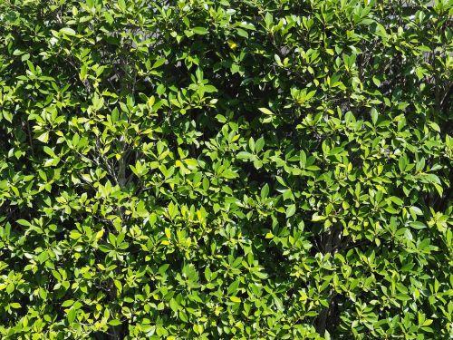 the wall tree pa
