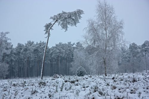 the winter's tale wintry forest