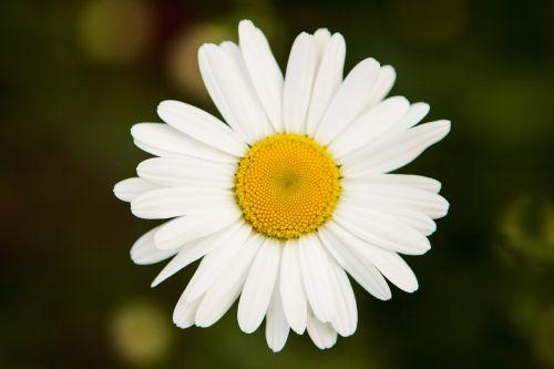 their mums,chrysanthemum,plants,flowers,spring,spring flowers,yellow,nature,cluster