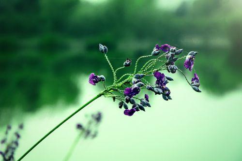 then force flowers aquatic plants ornamental plants