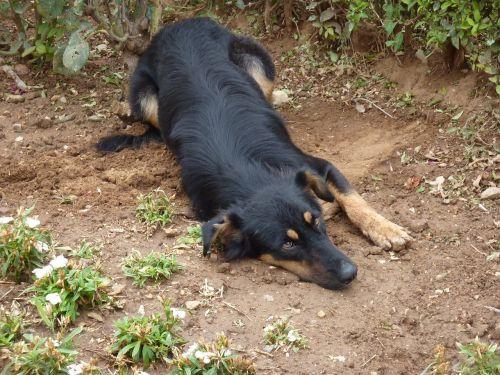 thessaloniki greece dog