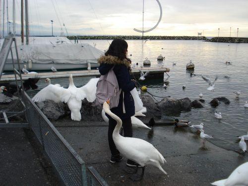 thief swans the thief