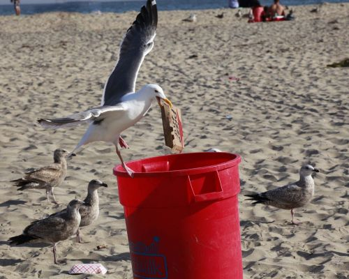 thief seagull trash can