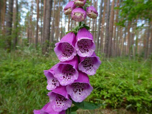 thimble plant nature