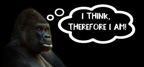 think thinking gorilla