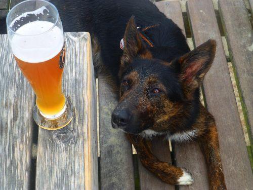 troškulys,alus,šuo,vasara