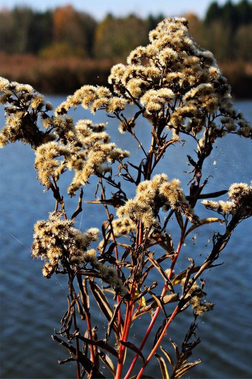 thistle greenhouse shrub autumn