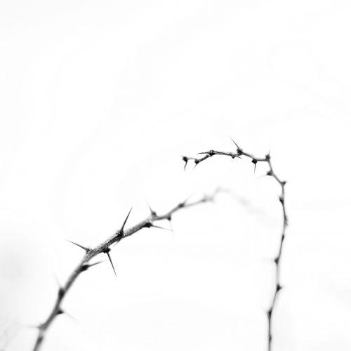 thorny path winter