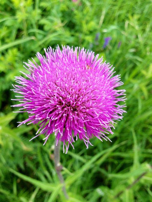 thorny flower plant