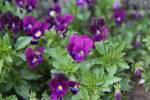 thoughts  thoughts purple  purplish