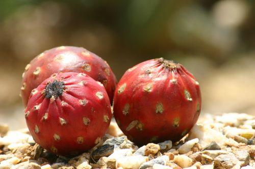 three fruit figs
