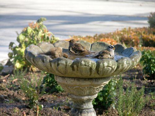 Three Birds Bathing
