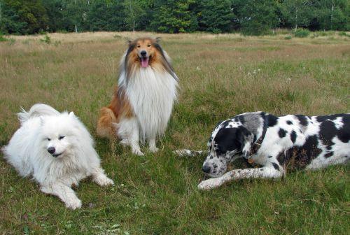Three Dogs In Field