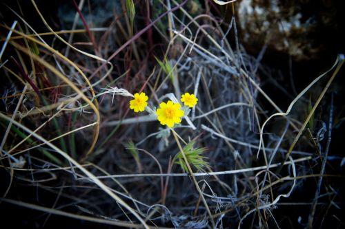 Three Yellow Wildflowers