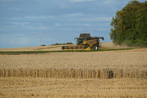 thresh agriculture cereals