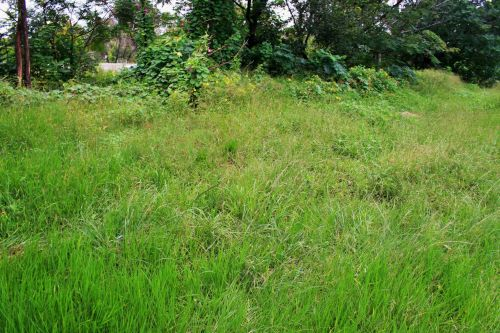 Thriving Grass And Weeds