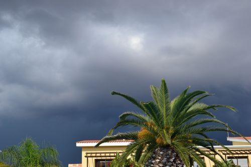 griauna,palma,debesis,dangus,pilkas dangus,audringas dangus