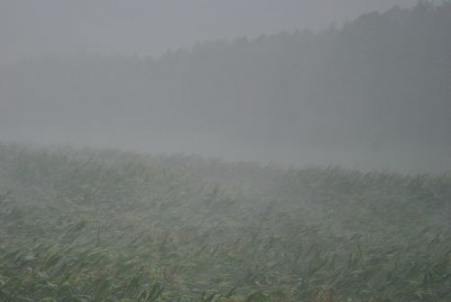 thunderstorm downpour forward