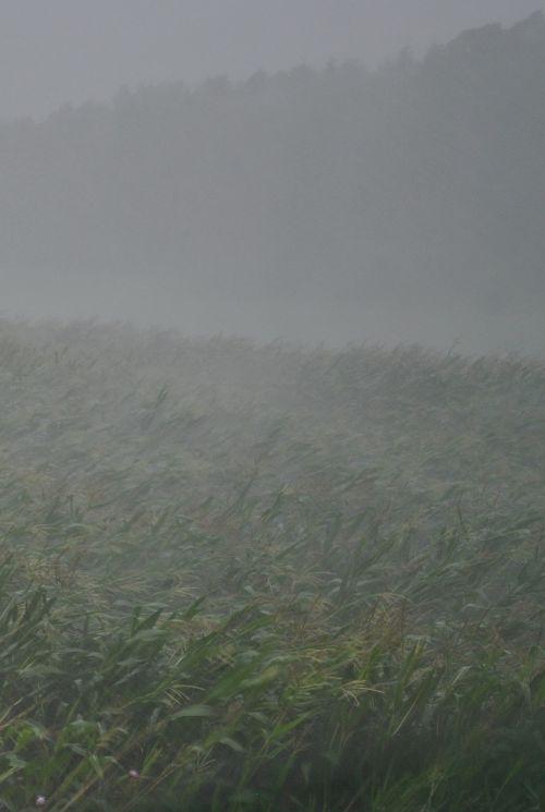 thunderstorm downpour rain