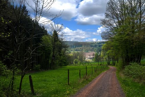 Turingijos federalinė žemė,miškas,Tiuringijos miškas,pilis Wartburg,Rennsteig,Mosbachas,miškas blogas