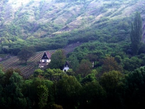 thuringia germany vineyard winegrowing