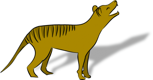 thylacine animal australia