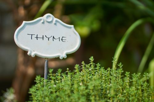 thyme herbs spice