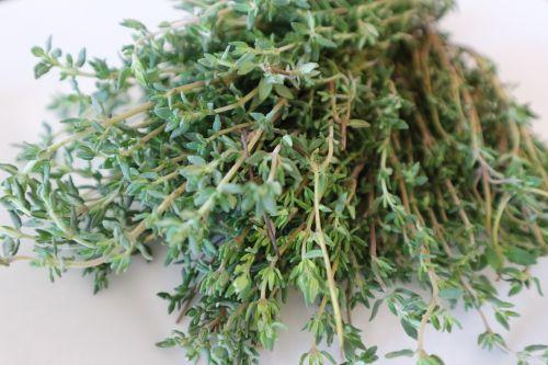 thyme medicinal herb cook