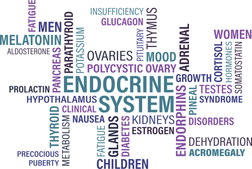 thyroid endocrine diabetes
