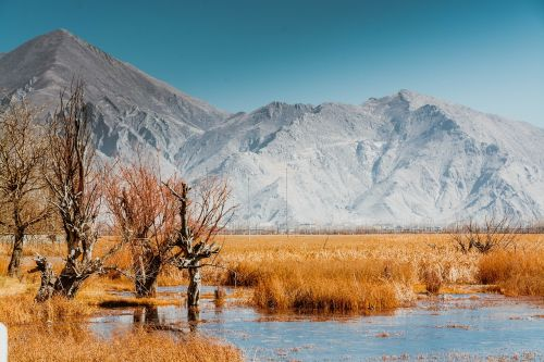 tibet lalu wetland nyainqentanglha