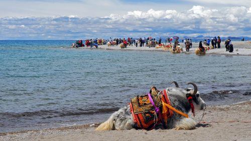 tibet namstso lake