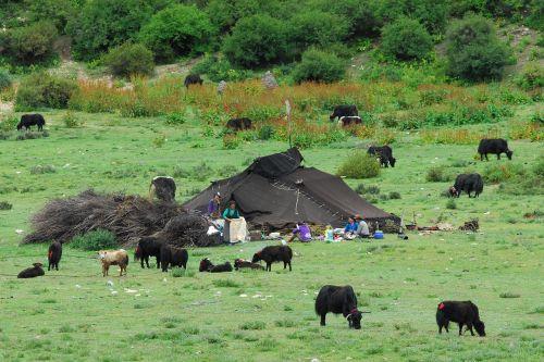 tibet nomads nature