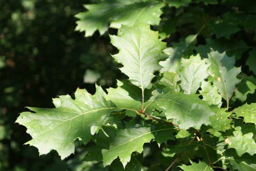 ticino switzerland tree