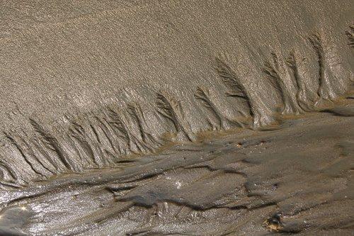 tidal  mud  dirt