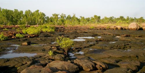 tidal rivulet kimberly rangers tropical