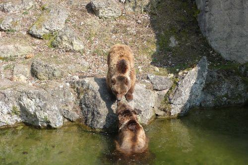tiergarten bear enclosure bear