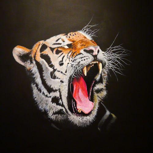 tiger panthera tigris predator