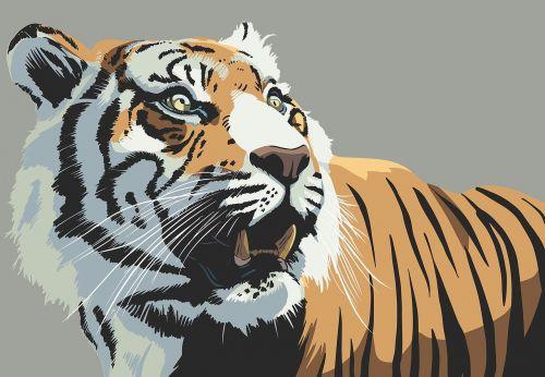 tiger animal stare