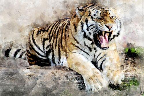 tiger predator animal