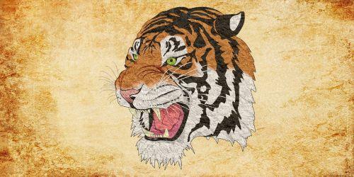 tiger cheetah lion