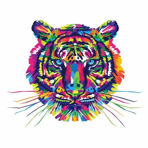 tiger  animals  cat