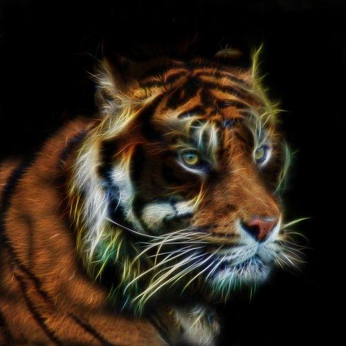 tiger  fractalius  profile picture