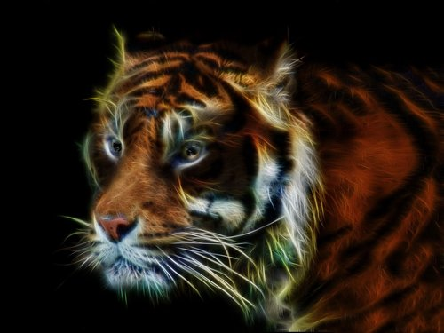 tiger  fractalius  wildcat