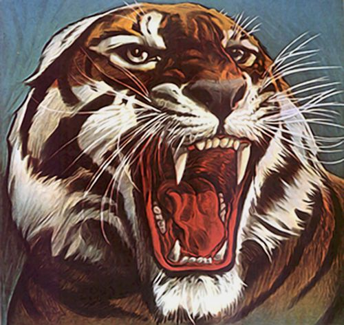 tiger animal wild